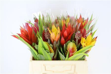 Bromelia Bouquet L