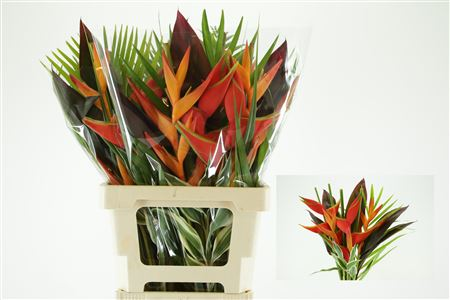 Bouquet Cotiere